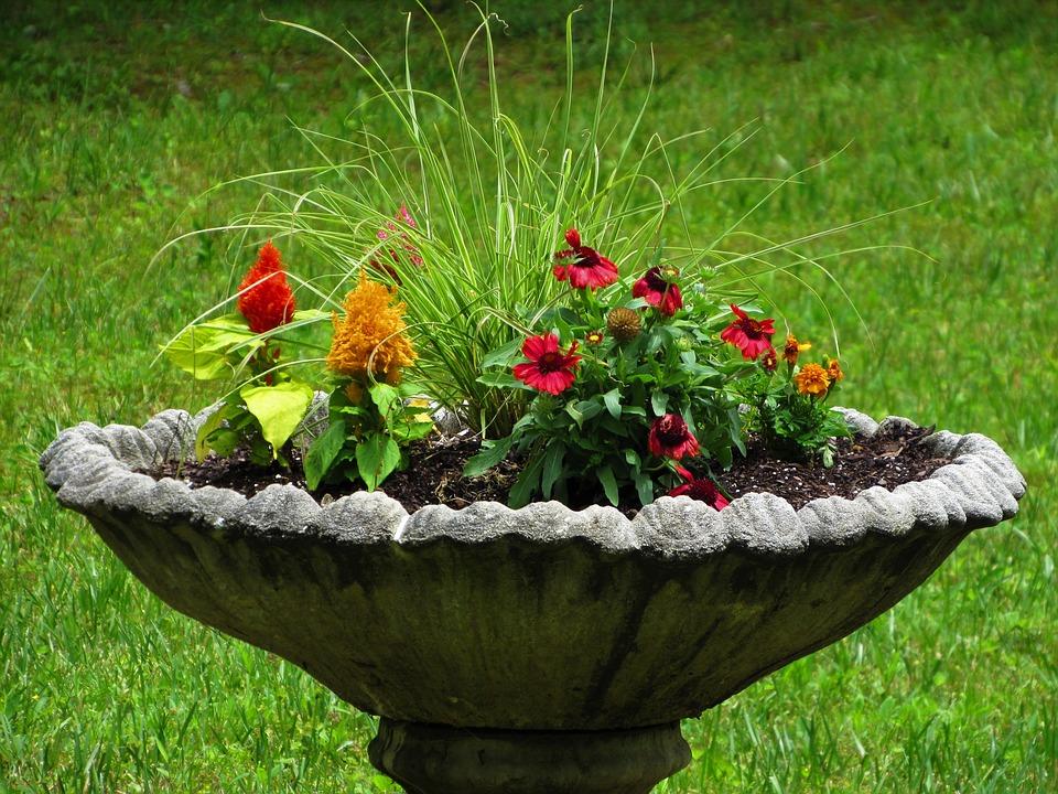 bird bath planter
