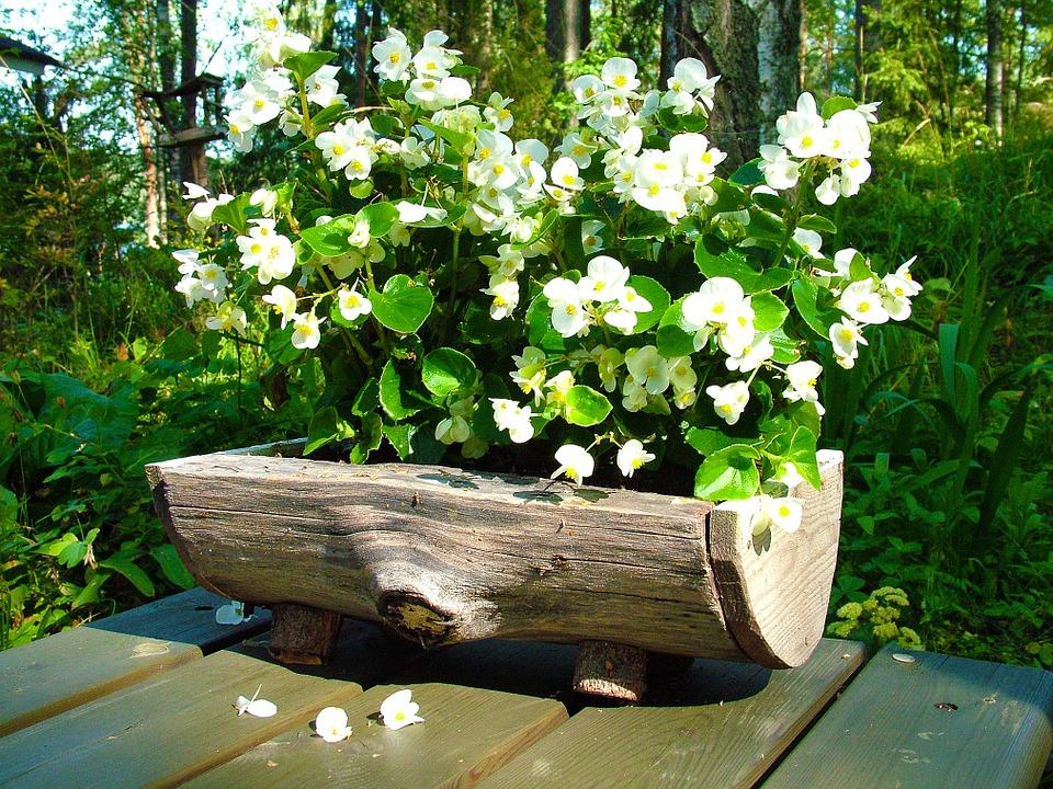 hollowed stump planter