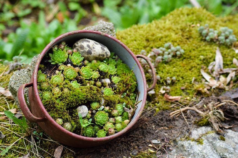 pots planter