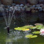 wild water featr